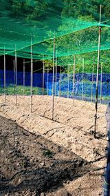 20190517野菜畑の屋根用ネット張り作業前2