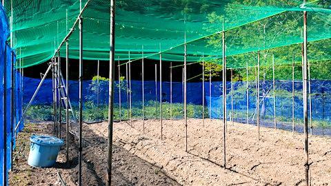 20190517野菜畑の屋根用ネット張り作業前3
