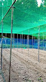 20190517野菜畑の屋根用ネット張り作業3