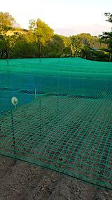 20190517野菜畑の屋根用ネット張り作業4