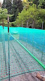 20190517野菜畑の屋根用ネット張り作業5