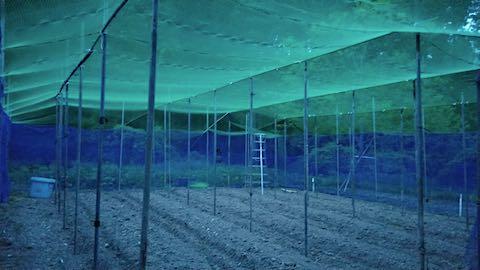20190517野菜畑の屋根用ネット張り作業8