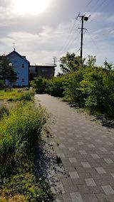 20190523速歩途中の公園内の様子雑草