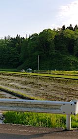 20190523山へ向かう途中の田んぼ田植え