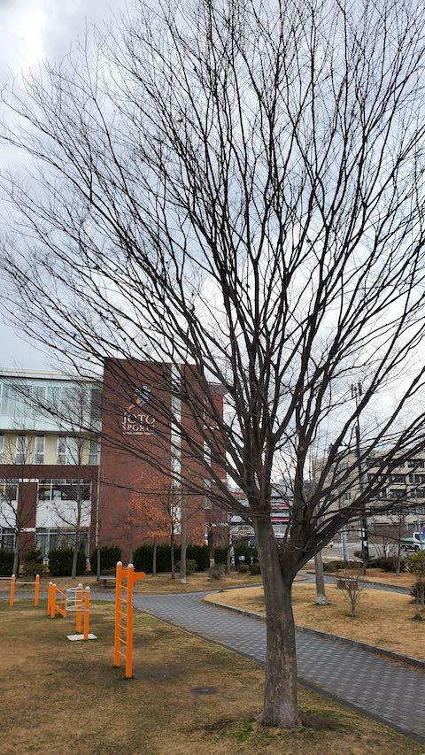 20200219速歩途中の公園高台から望んだ樹木の様子