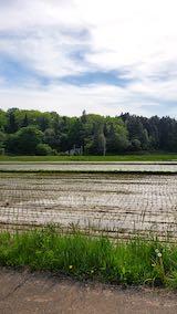 20200518山へ向かう途中の田植えの済んだ田んぼ1