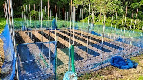 20200518野菜畑のネット張り4