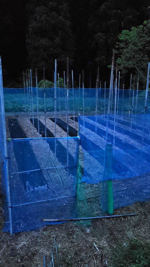 20200518野菜畑のネット張り6