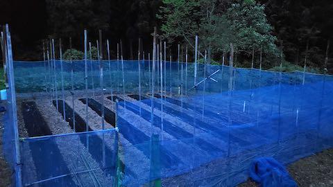 20200518野菜畑のネット張り7