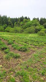 20200521ラベンダーの畑
