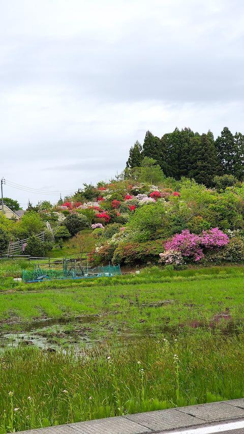 20200521ツツジの咲く丘の風景