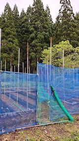 20200521野菜畑屋根の支柱に梁を固定する作業1