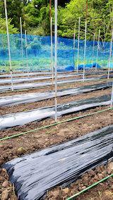 20200521野菜畑屋根の支柱に梁を固定する作業2