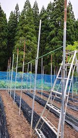 20200521野菜畑屋根の支柱に梁を固定する作業3
