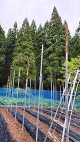 20200521野菜畑屋根の支柱に梁を固定する作業4