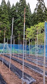 20200521野菜畑屋根の支柱に梁を固定する作業5