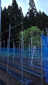 20200521野菜畑屋根の支柱に梁を固定する作業6