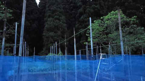 20200521野菜畑屋根の支柱に梁を固定する作業7
