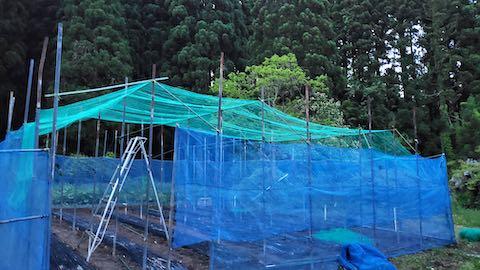 20200522野菜畑の屋根作り