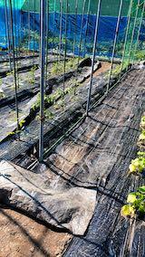 20200529野菜畑の防草シート1