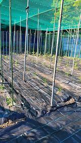 20200529野菜畑に防草シートを敷く作業1