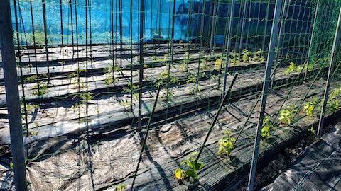 20200529野菜畑に防草シートを敷く作業3