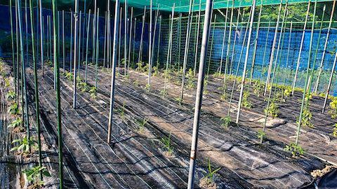20200529野菜畑に防草シートを敷く作業4