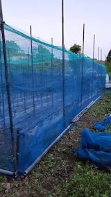 20200529野菜畑のネット周り最終仕上げ2