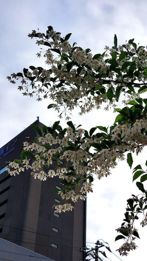 20200607歩途中で望んだ樹木の花
