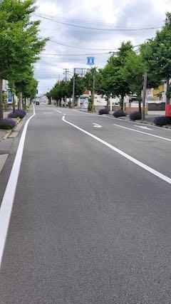 20200620東大通り歩道に咲く早咲きラベンダーこいむらさき3
