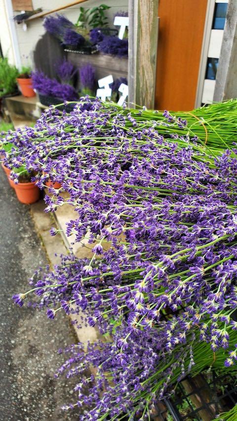 20200630中咲きラベンダーおかむらさきの生花3