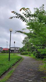 20200709速歩途中の公園内と南の空の様子