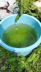 20200713山の様子味噌樽の降水量