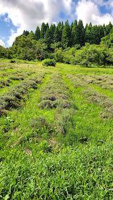 20200713草刈り前のラベンダー畑の様子3