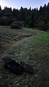 20200713草刈り後のラベンダー畑の様子4