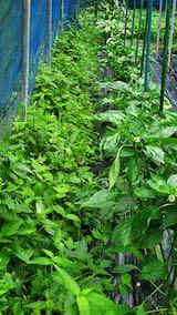 20200715野菜畑草刈り前1