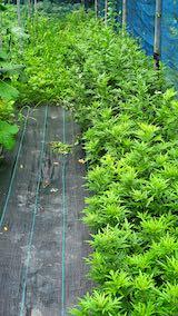20200715野菜畑草刈り前2