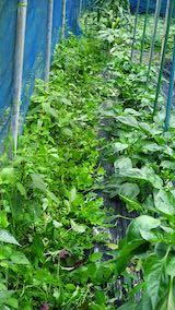 20200715野菜畑草刈り後1