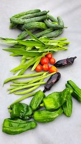 20200723今日収穫した野菜