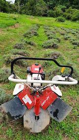 20200723耕耘機で耕す前のラベンダー畑の様子1