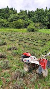20200723耕耘機で耕す前のラベンダー畑の様子2