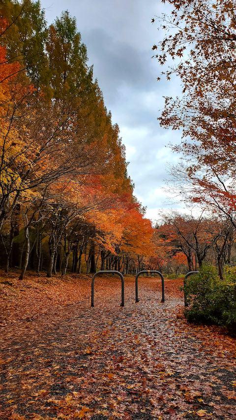 20201111旭川ダム公園の紅葉探索3
