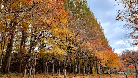 20201111旭川ダム公園の紅葉探索4