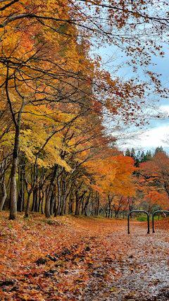 20201111旭川ダム公園の紅葉探索6