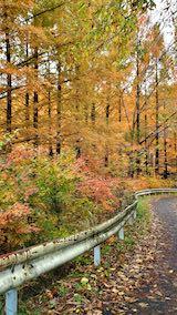 20201111旭川ダム公園の紅葉探索8