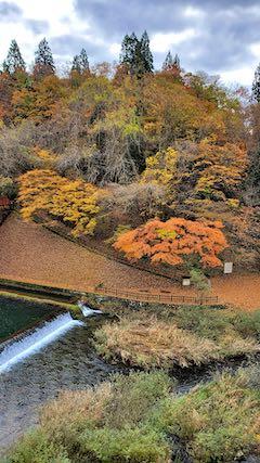 20201111藤倉水源池の紅葉探索6
