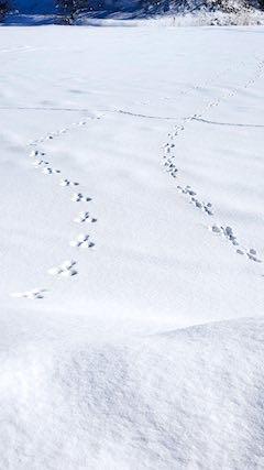 20210112山の様子田んぼにウサギの足跡