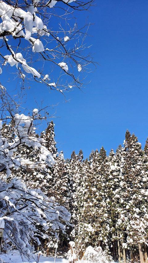 20210112山の様子雪をかぶった樹木と真っ青な空