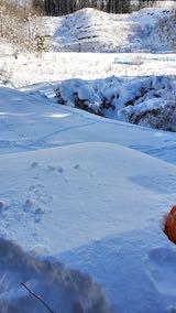 20210112幌の上に積もった雪の雪下ろし作業前2