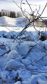 20210112幌の上に積もった雪の雪下ろし作業後1